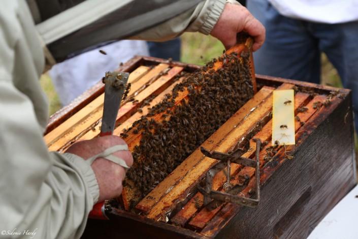cadres apiculture