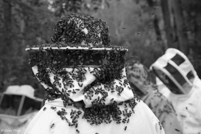 chapeau-d'abeilles apiculture