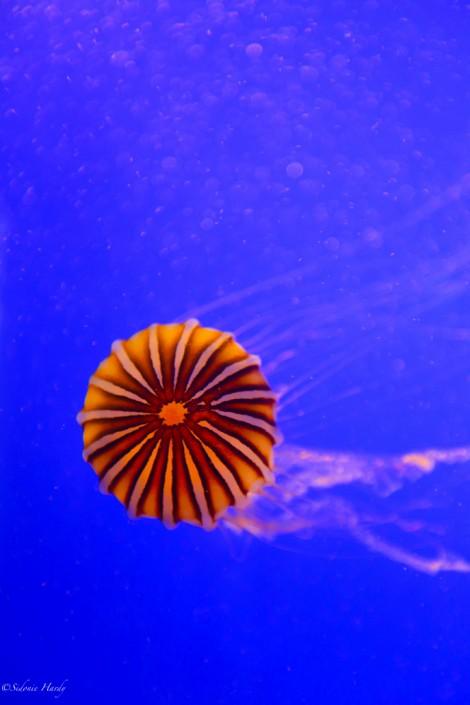 meduse aquarium la rochelle