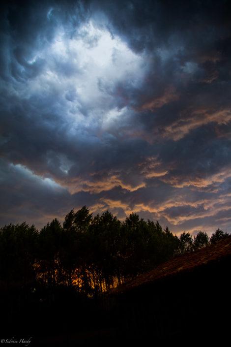 orage, pin, nuage, couché de soleil
